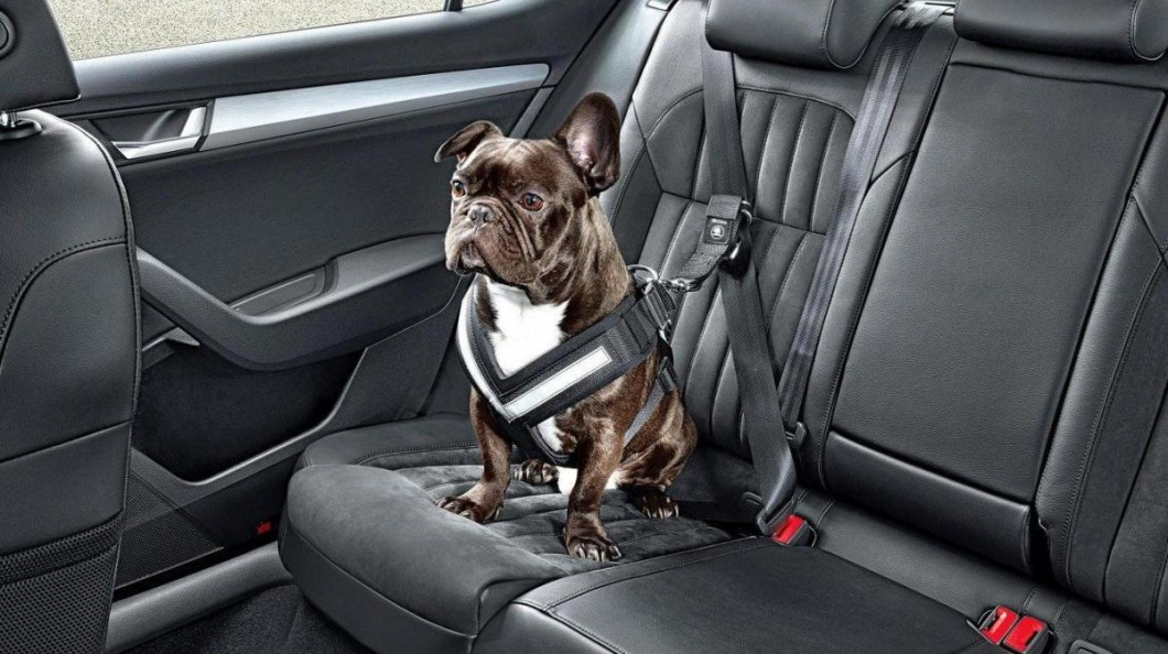Sécurité en auto et animaux domestiques